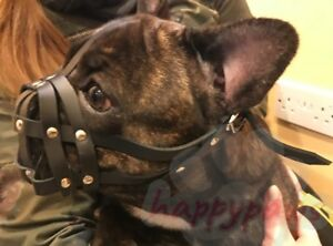 """Leather Dog Muzzle for French Bulldog """"Frenchies"""" other short snout dog's"""