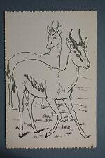 R&L Postcard: Raphael Tuck Paintbox Series, Antelope