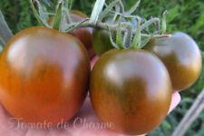10 graines de tomate KUMATO goût intense et sucré, simple à cultiver méth.bio