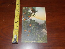 Vintage Postcard View Oranges And Snow In Claifornia Sunny Scenes