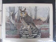 Original   Rex Brasher #366  Hand Colored Bird Print  Longear Owl  #366REX2 DSS