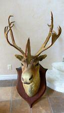 Caribou Reindeer Taxidermy Head Trophy Horns Antlers Stuffed Wall Mount