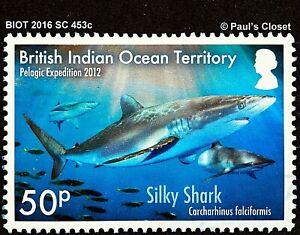 BIOT 2016 SC 453c USED NO GUM BIOT SHARKS SILKY SHARK #1  VERY FINE