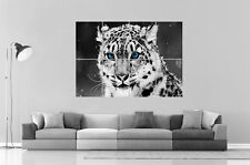 Leopard Blue Eyes Sauvage Home DECO  Wall Art Poster Grand format A0 Large Print