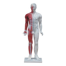 66fit™ Deluxe Acupuncture Male Model - 84cm - Pressure Point and Meridians
