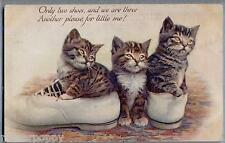 CATLAND III Three Cute Cats inside Shoes TUCK series 8888  PC UK Circa 1910
