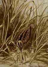 A4 Foto Seton Ernest 1901 Wilsons el recorte de impresión de cartel