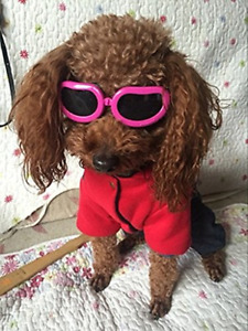 Gafas para perros peque�os Gafas de sol peque�as Protecci�n ocular fresca Forro