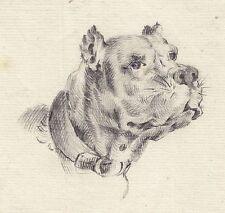RIDINGER Johann Elias (incremento corrispondente), testa di cane, matita disegno per 1750