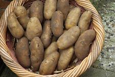 """Geest-Kartoffeln """"Übergröße"""" Ofen / Back u.Grill 10 kg"""