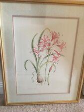 Limited Edition Botanical Print Nerine Bowdenii By Jenny Jowett