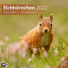 Eichhörnchen 2022 Broschürenkalender | Buch | Neu