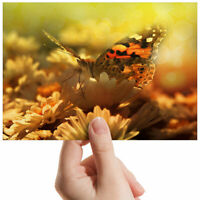 """Butterfly Around Flowers Small Photograph 6"""" x 4"""" Art Print Photo Gift #3155"""