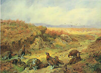 The Old Peat Track Vintage 1981 Red Grouse Bird Print Archibald Thorburn
