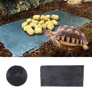 Turtle Reptiles Rock Food Dish Plate Grinding the Nail Tortoise Feeding Bowl