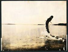 1923 KING FISH Vintage Photograph, HAMILTON WRIGHT Photo, BEAUTY!