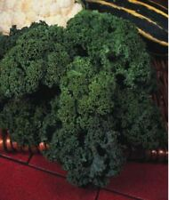 Organic - Vegetable - Kale - Borecole Westland Winter - 20 Seeds