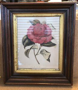 """Antique Victorian Deep Well Walnut Frame 14"""" X 12"""""""