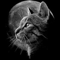 Metal Kitty Hoodie Mens Womens hoody cat pussy kitten rock punk black white