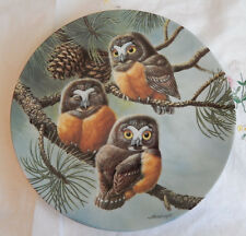 Forty Winks: Saw-Whet Owls Plate Baby Owls Of North America