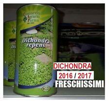 SEMI SEMENTI DI PRATO DICHONDRA DICONDRA REPENS GIARDINO SEMPREVERDE 2LBS 2016
