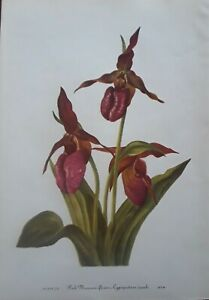 "Mary Vaux Walcott -1953 Print-""PINK MOCASSIN"" Botanical-Flower- 8x12- Plate #72"