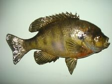 """New listing Just Completed. 9 1/2"""" Inch Real Skin Mounted Bluegill."""