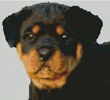 """Rottweiler CANE CUCCIOLO HEAD contato CROSS STITCH KIT 9.75 """"x 8,75"""""""