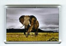 BULL AFRICAN ELEPHANT FRIDGE MAGNET