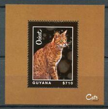 Guyana 2013 MNH Cats Ocicat 1v S/S Pets Domestican Animals Stamps