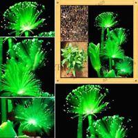 100pcs/bag Emerald Fluorescent Flower grass water Aquatic Plant seeds for home g