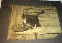 Rare Antique Victorian American Pet Cat Animal Outdoor Small Cabinet Photo! US!