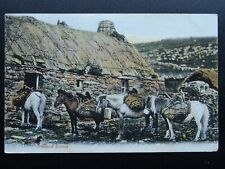 More details for shetland ponies with kishie (keshie) basket for carrying peat c1906 postcard