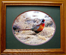 Ring Necked Pheasant Photo/Upland Game Bird/Pheasants Unlimited/Browning Shotgun