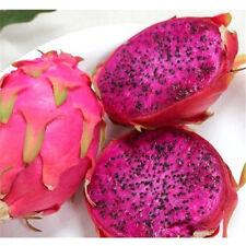 FD852 Red Dragon Fruit Seeds Hylocereus Pitaya Seeds Fruits Undatus Seed ~10PCs✿