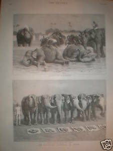 An Elephant Battery in India 1890 prints