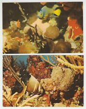 "[67147] OLD VIRGIN ISLAND FISH CHROME POSTCARD ""BLACK ANGELFISH"" & ""QUEEN ANGEL"""