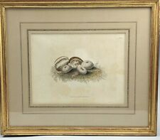 Fine Gold Leaf Framed Antique Hand Colored Sea Shell Conchology Print 103 NR KPB