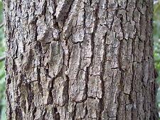 Huile essentielle de Bois de Hô - Bois de Shiu pure et naturelle 10 ml