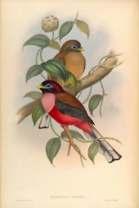 Set of 4 Vintage 19th Century Ornithology Birds of Asia Reproduction Prints A4
