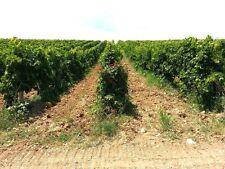 "12 bottles MONTEPULCIANO D'ABRUZZO DOC 2013 "" BIO "" AZ. AGRICOLA SAN LORENZO"