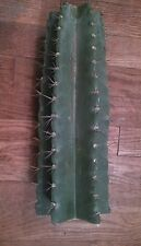 """Cereus Peruvianus Two (2) cuttings approximately 12"""" in length"""