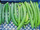 30+JAPANESE LONG PICKLING CUCUMBERS Seeds Mild Crisp Organic Garden/Containers