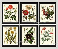Unframed Botanical Wall Art Print Set 6 Antique Poppy Red Rose Dandelion Decor