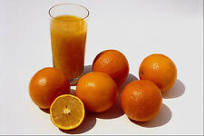 699078 Oranges A4 Photo Texture Print