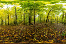 Autumn in Forests of Norway 360 Degree Panorama Photo Art Print Poster 18x12 inc