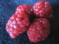 Wax Large Raspberries (scented), Fake Food Fruit, 8 oz