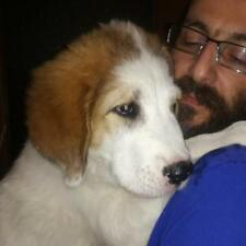 Donate to save Dogs in need! Family-run animal shelter in Greece