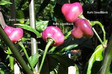 Cheiro Roxa Chilli - An Extraordinary Pretty & Rare Chilli You Will Ever Grow!!!