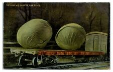 Early 1900s Exaggerated Cabbage, Lake Shore & Michigan Southern Railway Postcard